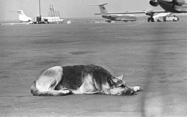 犬のパルマ - Sputnik 日本