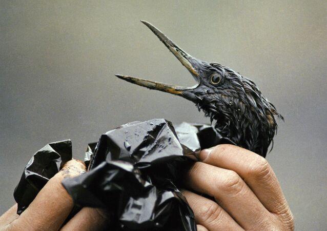 原油による土壌汚染レベルを迅速に測定する新しい方法