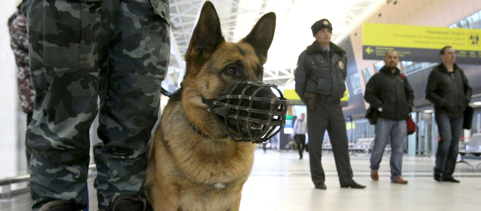 警察犬 - Sputnik 日本, 1920, 11.09.2020