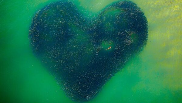 Drone Photo Awards 2020 グランプリ受賞作品『Love Heart of Nature』  Jim Picôt氏 - Sputnik 日本