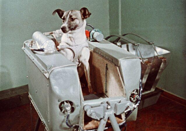 宇宙船スプートニク2号に搭乗するライカ