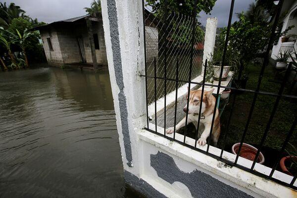 ホンジュラスの都市テラで、熱帯暴風雨「エータ」の影響で冠水した道路を見つめる犬 - Sputnik 日本