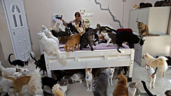 オマーン首都マスカットで飼い猫に餌をあげる女性 - Sputnik 日本