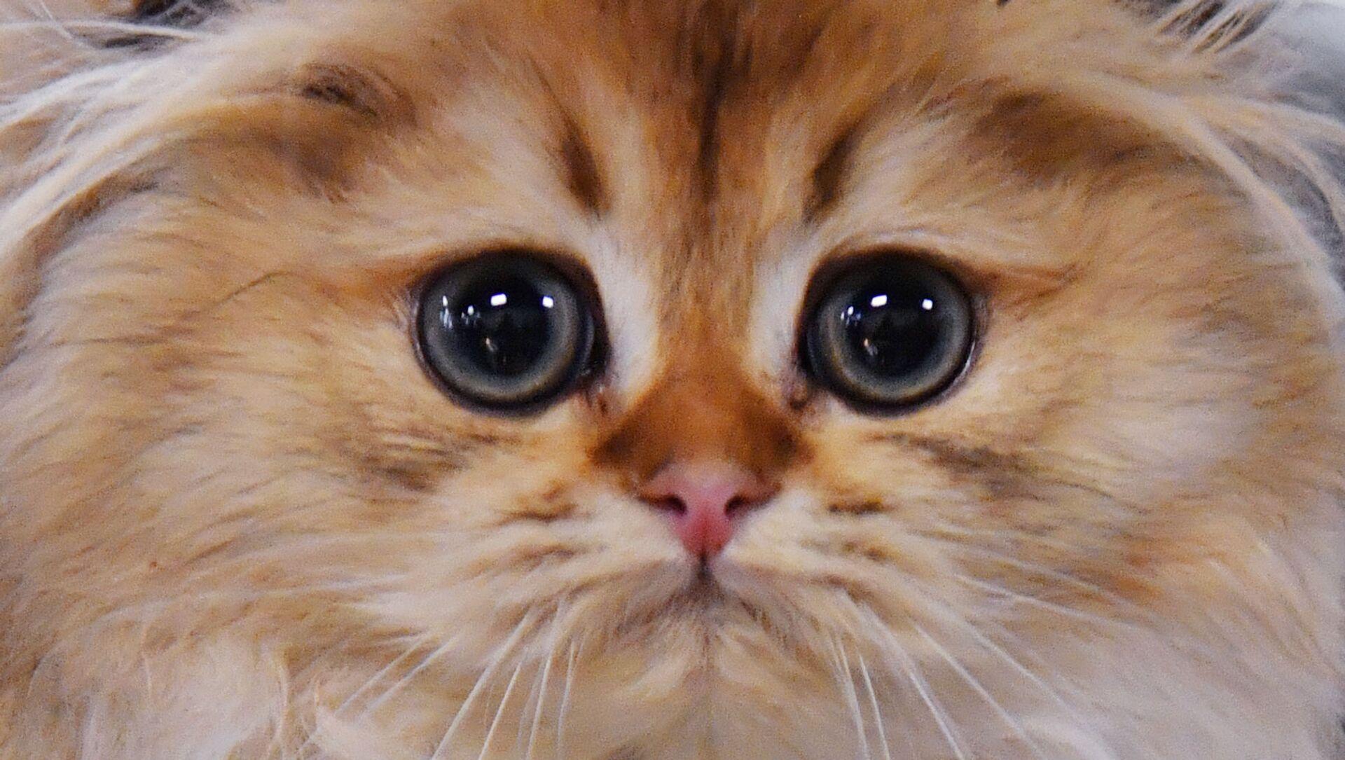 猫 - Sputnik 日本, 1920, 19.09.2021