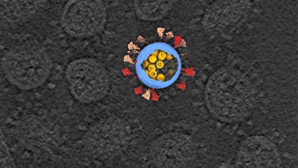 Крио-электронное томографическое изображение вирусов SARS-CoV-2 - Sputnik 日本