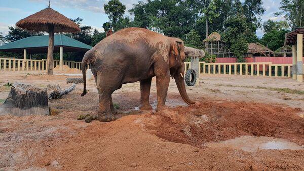 Самый одинокий слон Kaavan в заповедник в Камбодже - Sputnik 日本