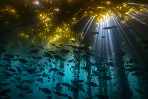 「コールドウォーター」部門1位入賞作品『Cathedral of Kelp』 Jon Anderson氏 - Sputnik 日本