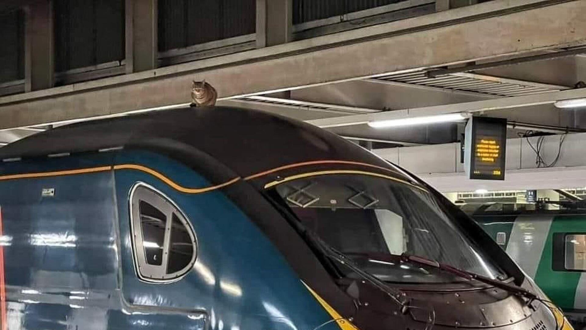 猫が高速列車の屋根にのぼり、出発が2時間30分遅れる 英ロンドン - Sputnik 日本, 1920, 05.03.2021