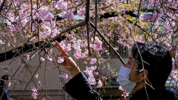 東京都内の公園で早咲きの桜を眺める女性 - Sputnik 日本