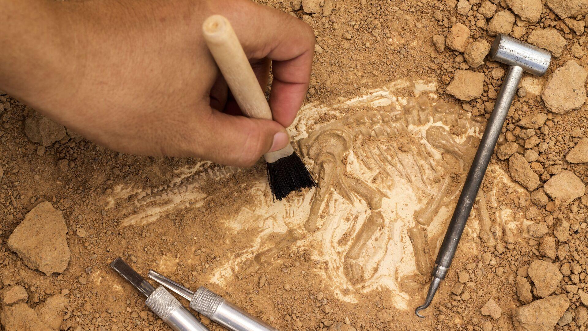 トゲを持つ恐竜の化石 モロッコで発見 - Sputnik 日本, 1920, 24.09.2021