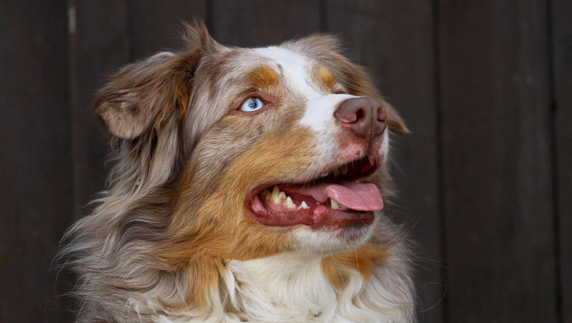 犬 - Sputnik 日本, 1920, 17.09.2021