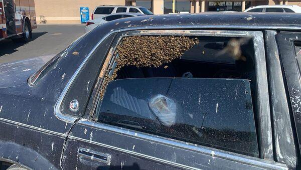 車でのハチ - Sputnik 日本