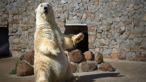 ロシアの動物園で世界最高齢級の白熊が永眠 - Sputnik 日本