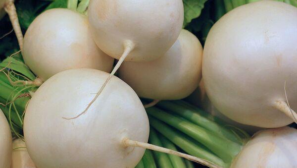 ダイコン属の野菜 - Sputnik 日本