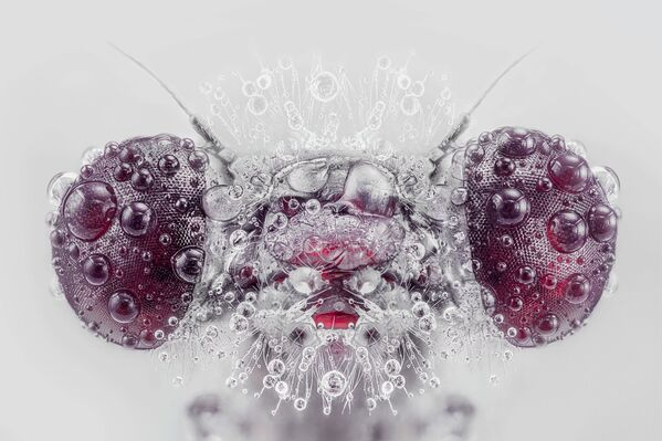 高評価獲得作品『Monster(モンスター)』 Pedro Luis Ajuriaguerra氏(スペイン) - Sputnik 日本