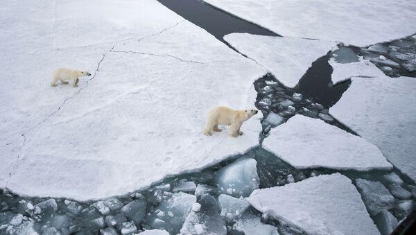 日本の新型砕氷船は学術のためではなく、地政学的に必要なもの - Sputnik 日本