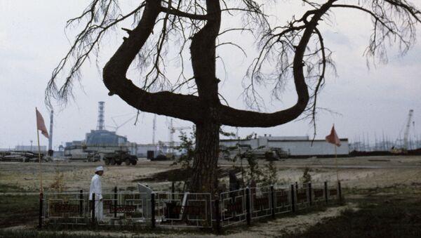 Сосна в 500 метрах от Чернобыльской АЭС - Sputnik 日本