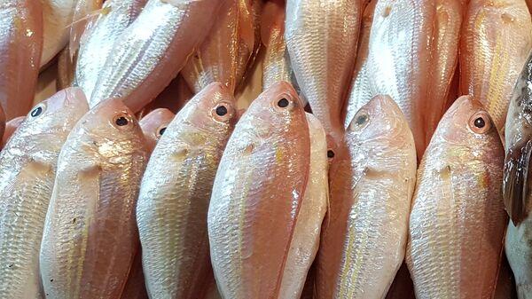 魚 - Sputnik 日本