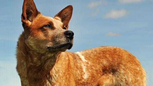 アフガン カブール空港から200匹の犬を出国させた英国人 - Sputnik 日本