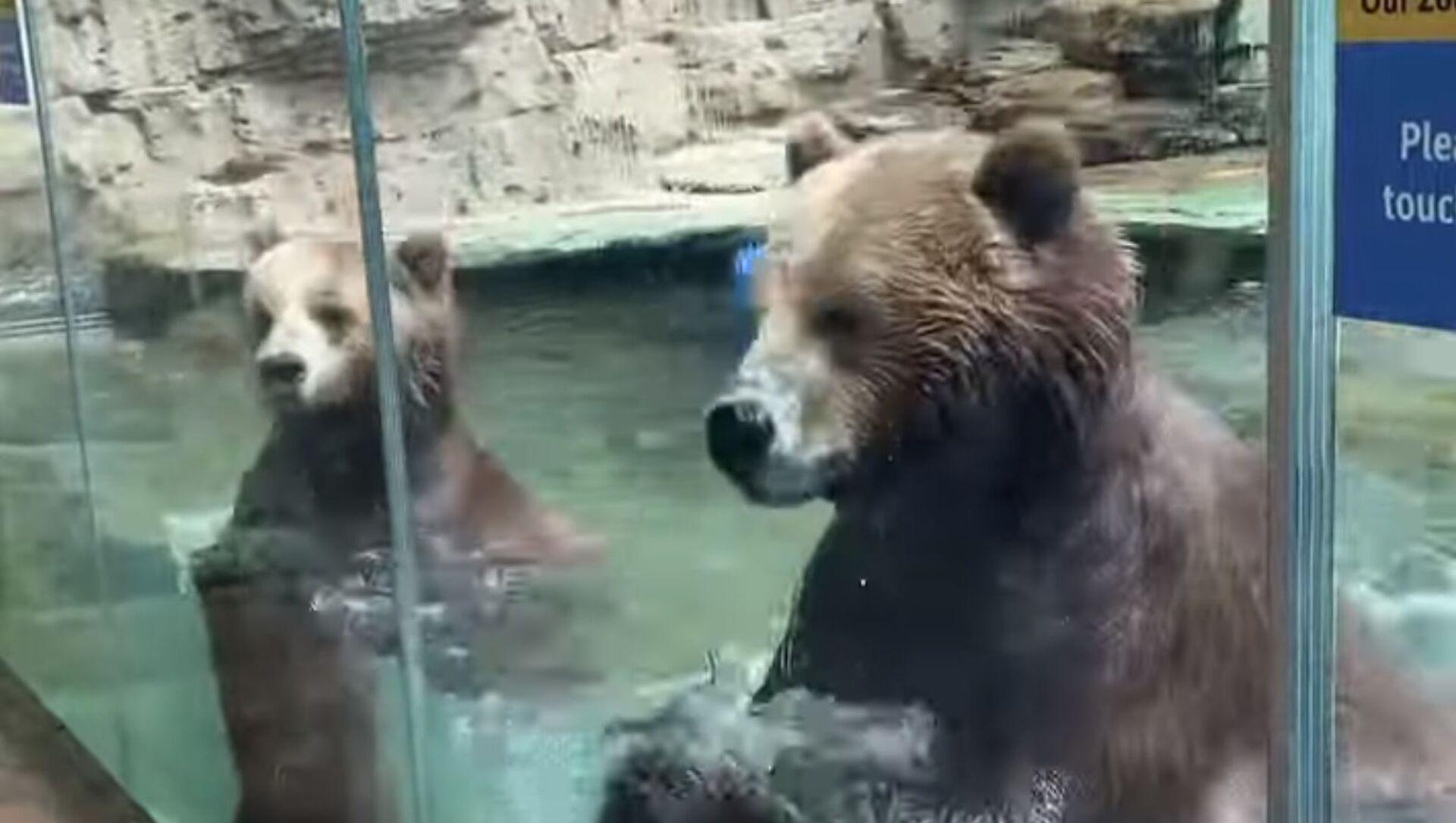 Dancing Bears at Saint Louis Zoo || ViralHog - Sputnik 日本, 1920, 27.05.2021