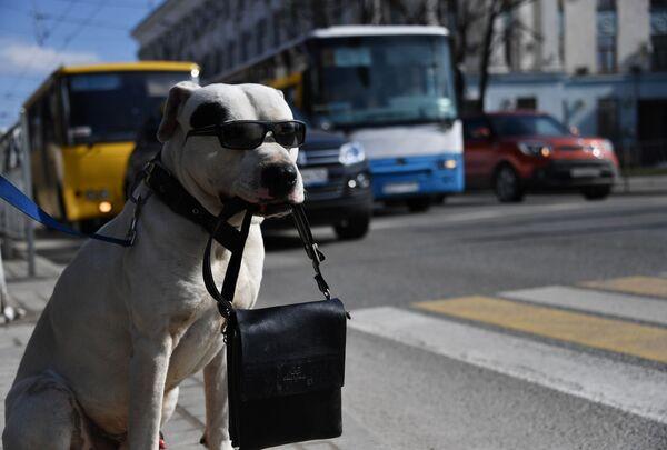 ロシア・クリミア共和国のシンフェロポリで、道路脇で鞄を口にくわえる犬 - Sputnik 日本