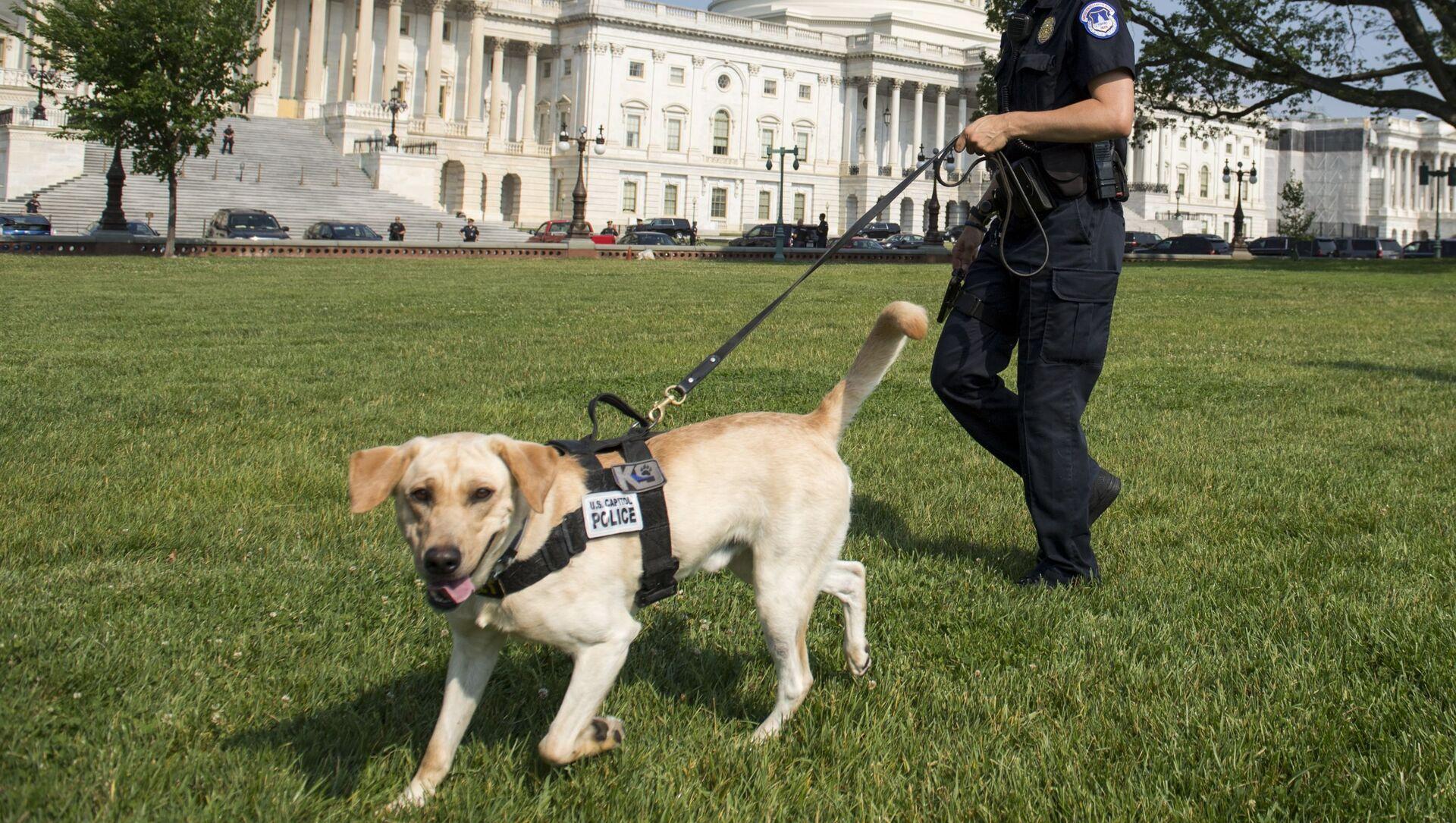 警察犬 - Sputnik 日本, 1920, 05.06.2021