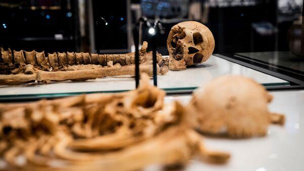デンマーク国立博物館のショーケースに展示された、約1000年前に生き別れたバイキングの人骨 - Sputnik 日本