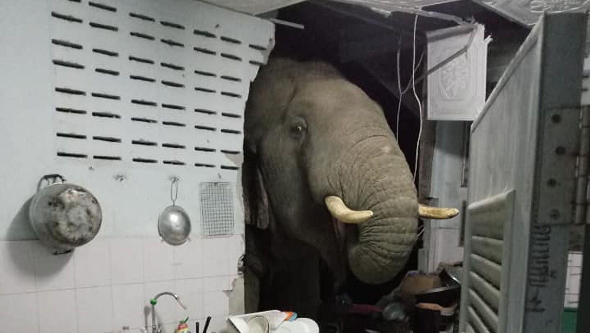 象が民家の壁を破壊 - Sputnik 日本, 1920, 22.06.2021