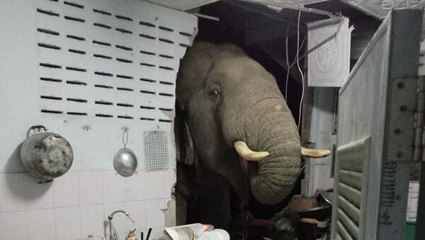 米を求めて台所の壁を破壊したゾウ - Sputnik 日本