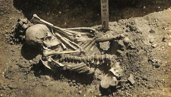 日本で発見 サメに襲われた最古の犠牲者の遺骸 - Sputnik 日本