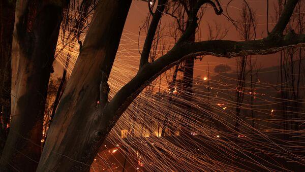 大規模森林火災 - Sputnik 日本