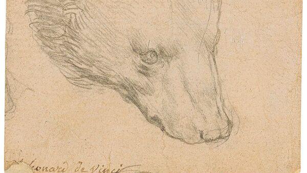 レオナルド・ダ・ヴィンチのクマの頭部の素画 - Sputnik 日本