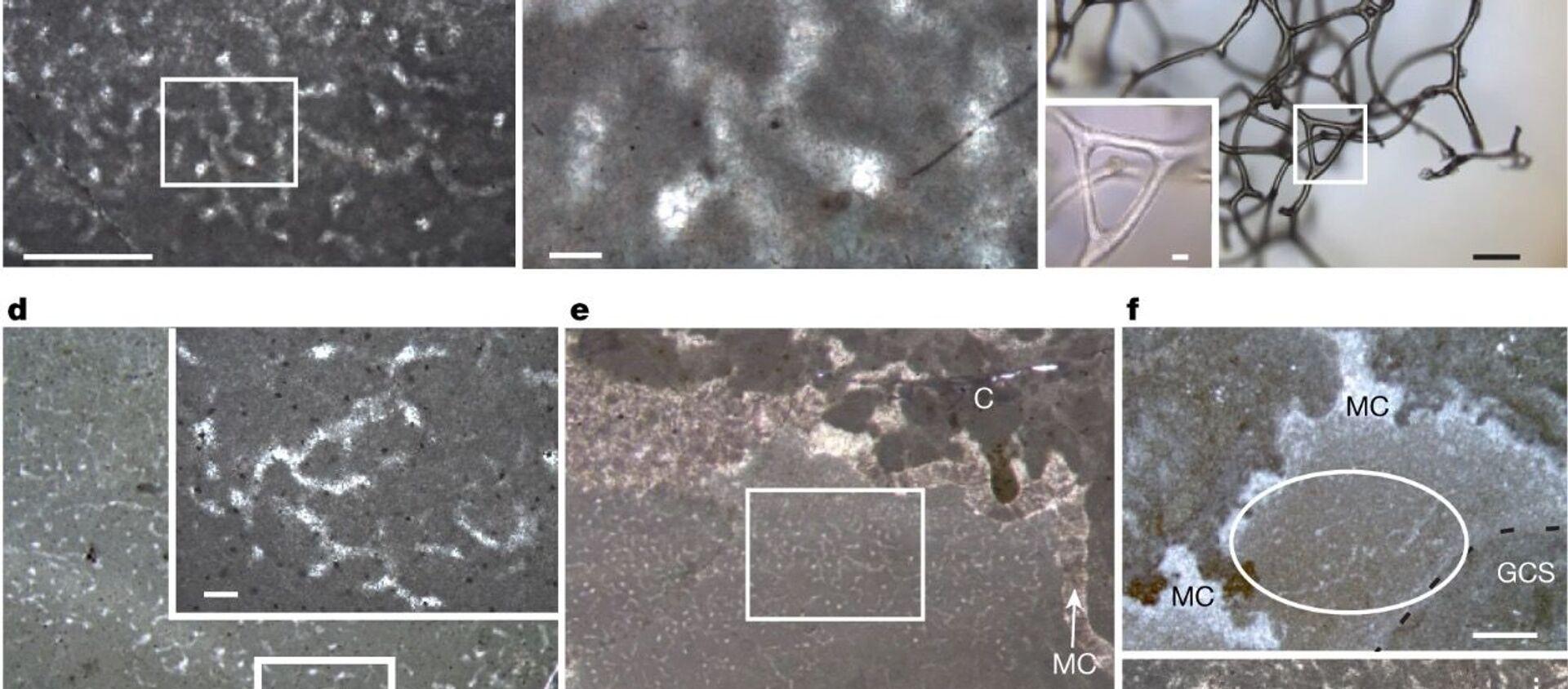 Окаменелости, напоминающие губки, в древних рифах, возраст которых составляет 890 миллионов лет - Sputnik 日本, 1920, 29.07.2021