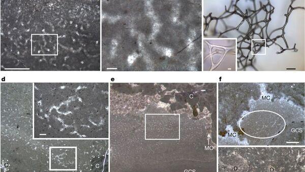 Окаменелости, напоминающие губки, в древних рифах, возраст которых составляет 890 миллионов лет - Sputnik 日本