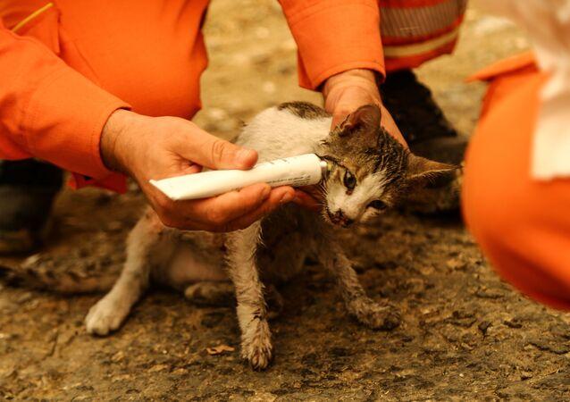 森林火災でケガを負った子猫の手当をするボランティア