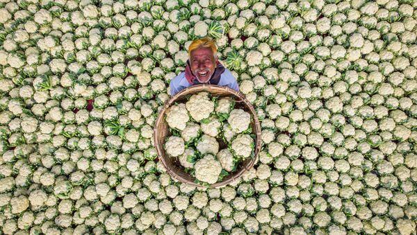 ラフィド・ヤサール氏の作品「幸せな農夫」 - Sputnik 日本