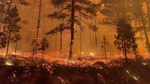 カリフォルニアの森林火災 - Sputnik 日本