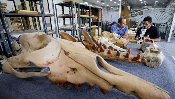 死神アヌビスを思わせる頭部を持つ4本脚のクジラの化石 エジプトで発見 - Sputnik 日本