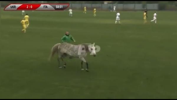 ウクライナとイタリアのサッカーの試合に犬2匹と馬が乱入 - Sputnik 日本