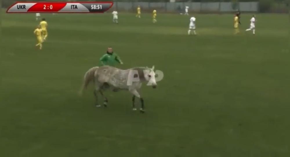 ウクライナとイタリアのサッカーの試合に犬2匹と馬が乱入