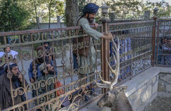 アフガニスタンのカブール動物園で、鹿にタリバン(ロシアではテロ組織と認定、活動禁止)の戦闘員 - Sputnik 日本