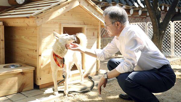 文在寅(ムン・ジェイン)大統領 - Sputnik 日本