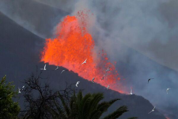クンブレビエハ火山から流れ出る溶岩の近くを飛ぶ鳩 - Sputnik 日本