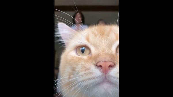 猫が画面ジャック! TikTok撮影を妨害 - Sputnik 日本
