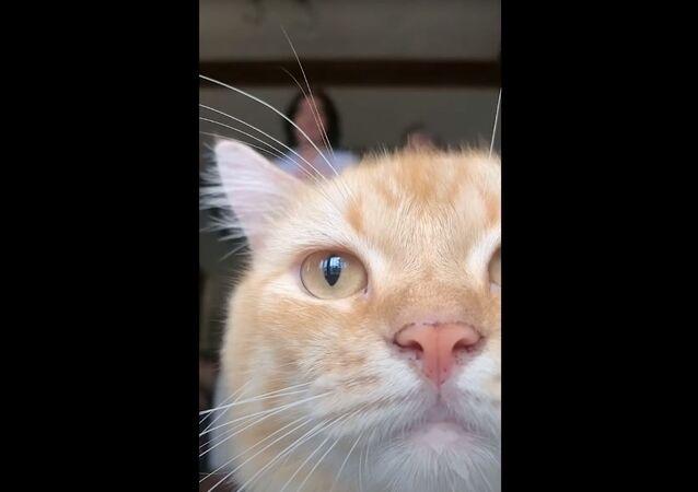 猫が画面ジャック! TikTok撮影を妨害
