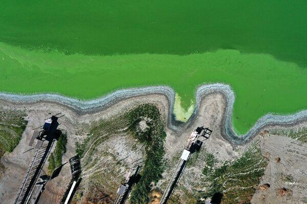 米カリフォルニア州クリアレイクにあるレッドバッド・パークで、緑色に染まった湖 - Sputnik 日本