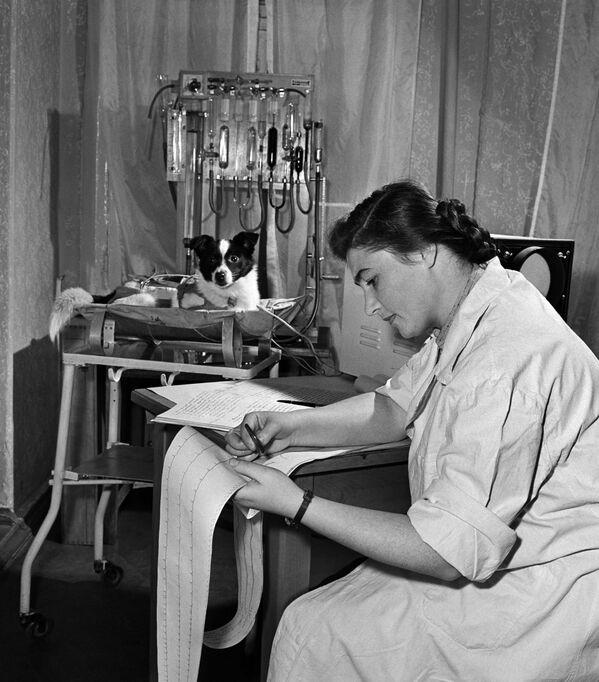 ライカの世話をする生物学者、アドリア・コトフスカヤ氏(1956年11月9日)。ライカは翌年11月3日、世界初の宇宙飛行犬として人工衛星「スプートニク2号」に搭乗した - Sputnik 日本