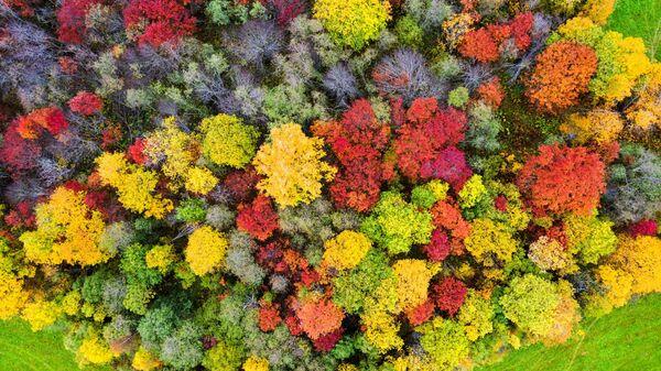ロシア・カレリア共和国で、紅葉シーズンを迎えた森林と畑 - Sputnik 日本