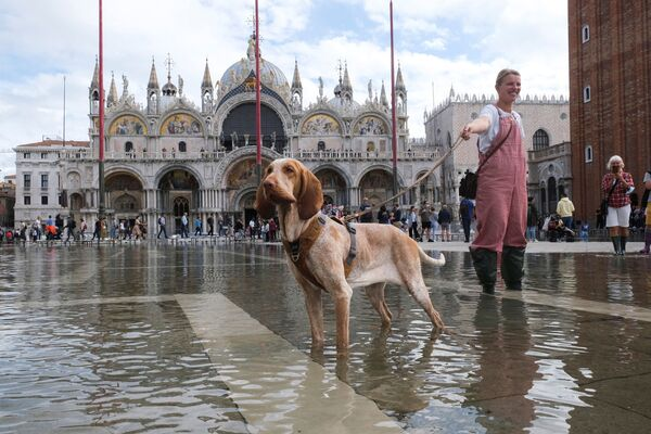 イタリア・ベネチアの高潮で冠水したサン・マルコ広場で、犬の散歩をする女性 - Sputnik 日本