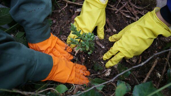 ベルギー 不要端末を樹木に変えるキャンペーン - Sputnik 日本